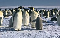March of the Penguins 2 – The Next Step
