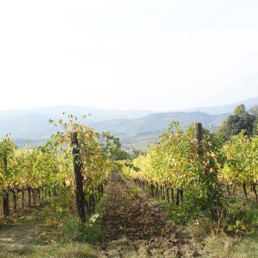 アグリツーリズモ農園のキャンティワインから学ぶ自分自身と向き合うオーガニックライフとは?