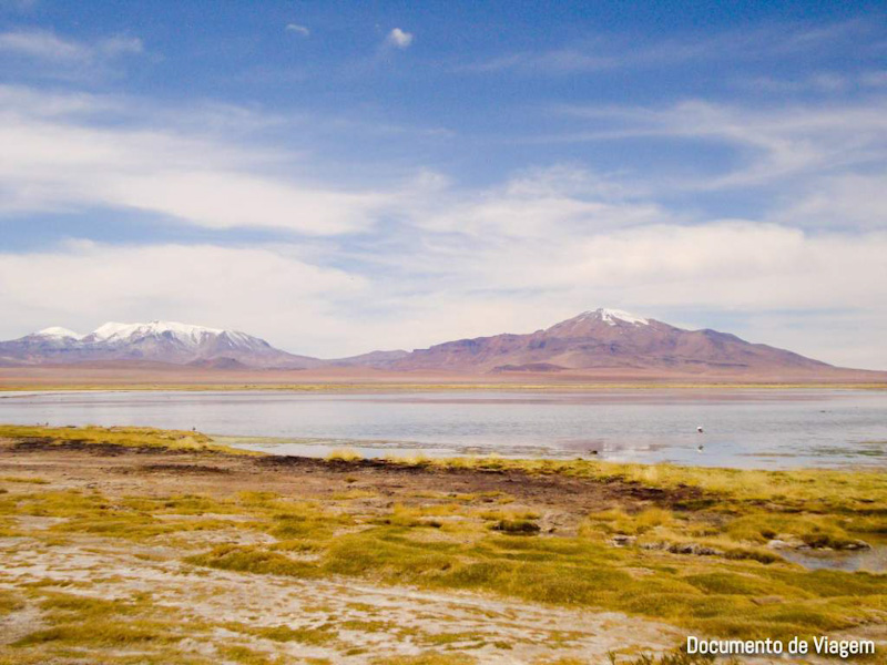 Lago salgado com flamingos