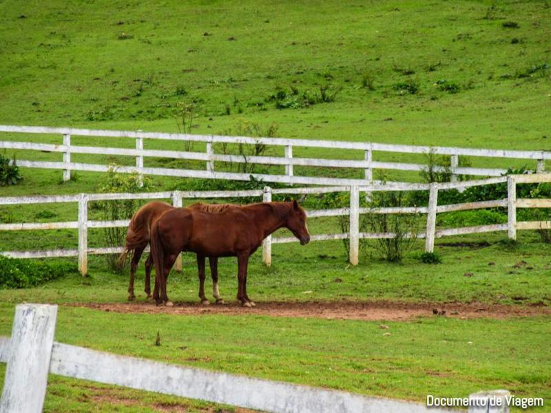Passeio a Cavalo Tarundu