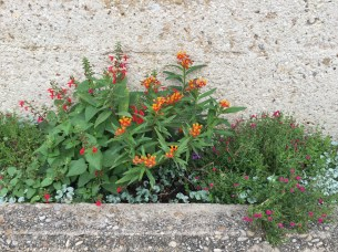 Flowers along the San Antonio River Walk