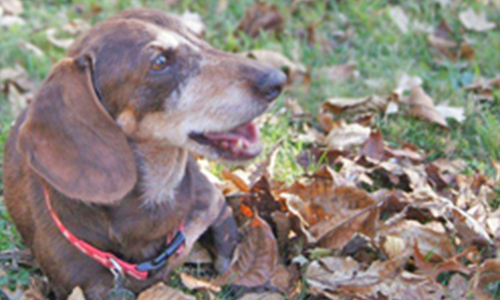 Success story Rusty