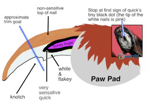 Nail trim for health- anatomy