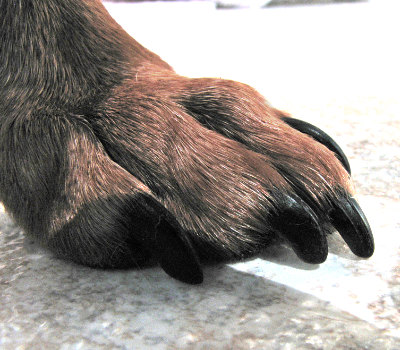 paw-long-nails.jpg?fit=400%2C350&ssl=1