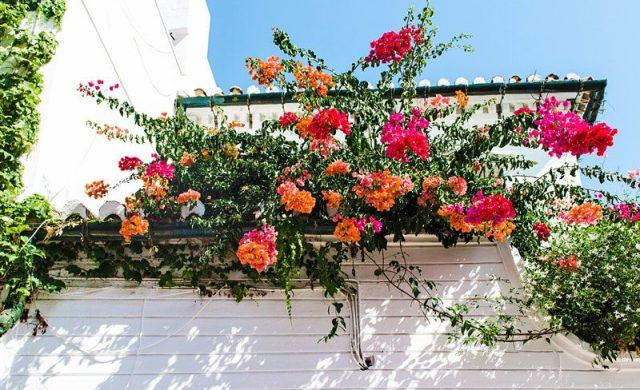 mooie geranium bloemen