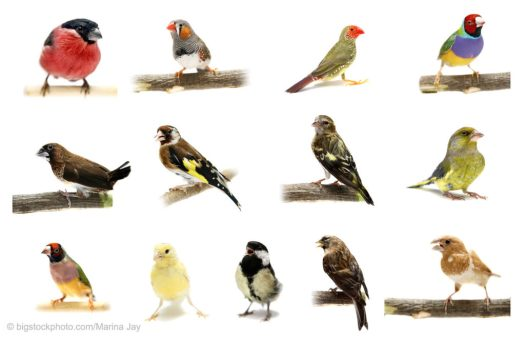 A Variety of Bird Species