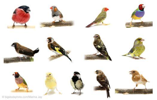 Bird Migration Data