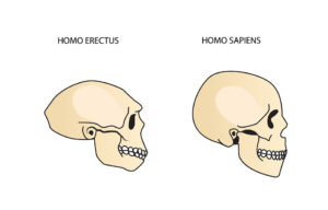 Human Evolution Theories More Confounded