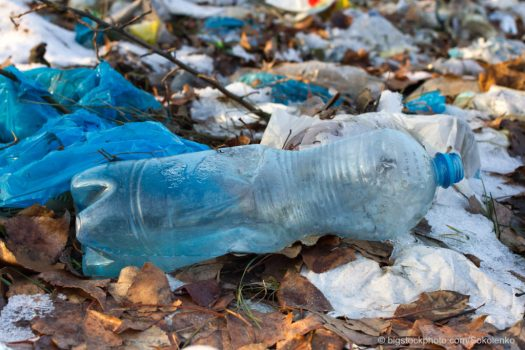 Food for Plastic-Eating Worms