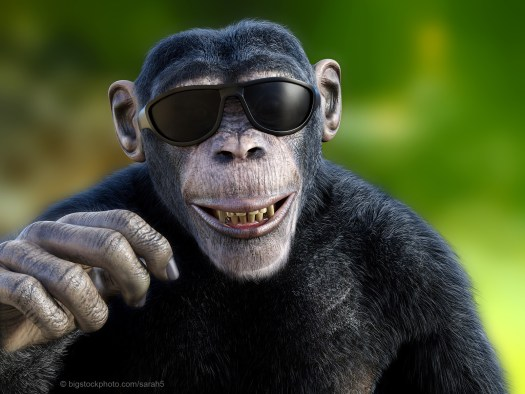 Guilty of Anthropomorphism - Smiling Chimp with Sunglasses