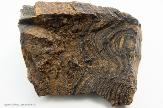 Greenland Stromatolites are Faux Fossils but this one is real.