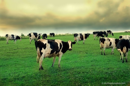 Milk Production and Greenhouse Gases