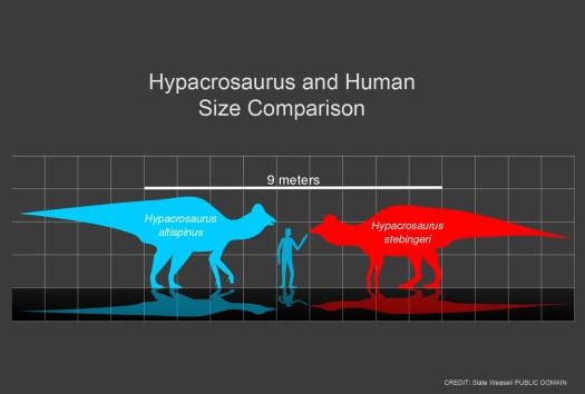 Dinosaurs in Genesis 1