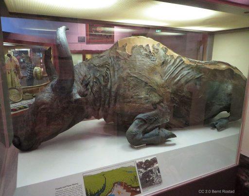 Flash-Frozen Extinct Species