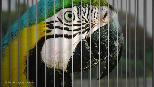 Wildlife Trade and Health