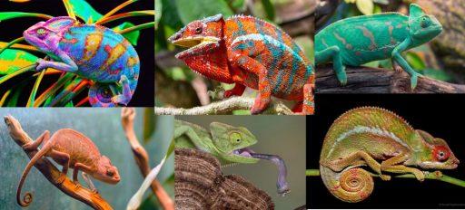 The Design of a Chameleon