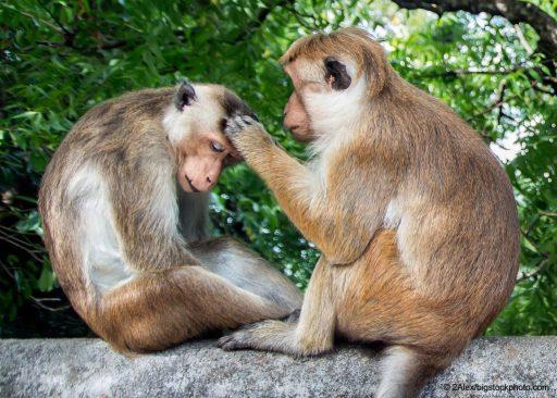 Animals Seem to Demonstrate Altruism