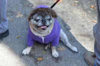 Howlloween Fun: Watching a Dog Costume Competition