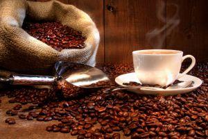 Le café haïtien : sa situation actuelle et l'impact du changement climatique sur celui-ci