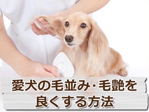 愛犬の毛並み・毛ツヤを良くする4つの方法