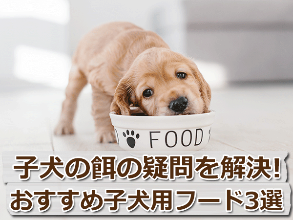 子犬の餌の疑問を解決!おすすめパピー用ドッグフード3選