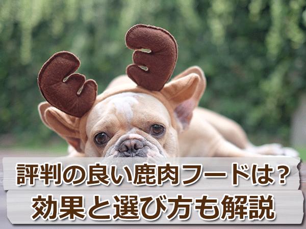 評判の良い鹿肉フードランキング!【犬への効果・選び方】