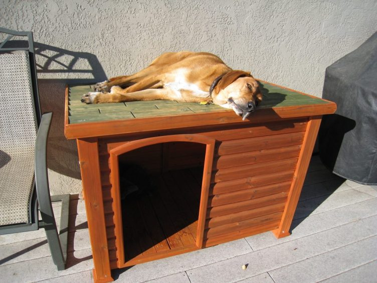 6 Best Dog Houses For Outdoors and Indoors