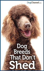 Dogs that dont shed