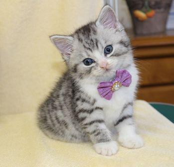cat1608-00093