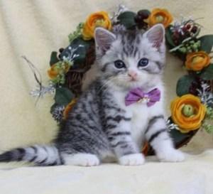 cat1608-00093_05