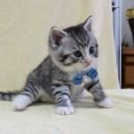 cat1608-00094_05