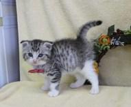cat1608-00095_03