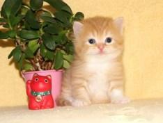 cat_img_2_3d3b42363479
