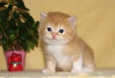 cat_img_3_843a4831db57
