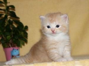 cat_img_4_6d7e99524c49