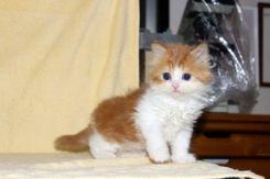 cat_img_2_3939d8ed74b2