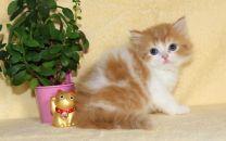 cat_img_3_5a3331ffdcb2