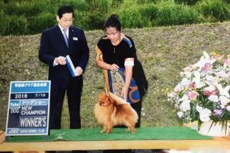 父親犬はハドレ-系JKC.チャンピオン オーシャンですよ♪