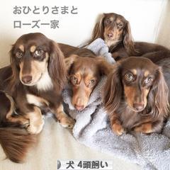 にほんブログ村 犬ブログ 犬 4頭飼いへ