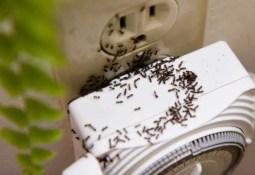 Karıncaları Doğal Yollarla Uzaklaştırmak