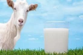 Keçi Sütü Neye İyi Gelir
