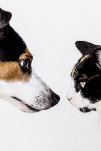dog cat face to face