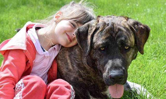 Picking a dog for your child