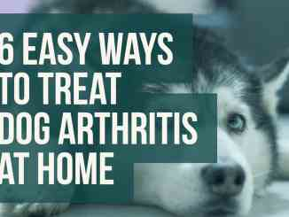 6 Easy Ways To Treat Dog Arthritis At Home