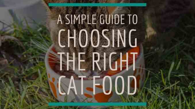 A Simple Guide to Choosing the Right Cat Food