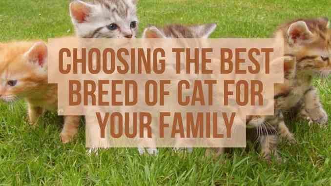 Choosing The Best Breed Of Cat For Your Family