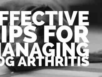 Effective Tips for Managing Dog Arthritis