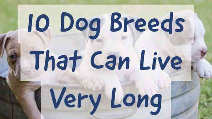 10 Dog Breeds That Can Live Very Long