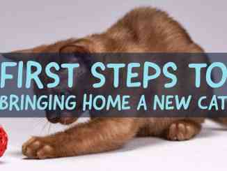 5 Steps To Bringing Home A New Cat