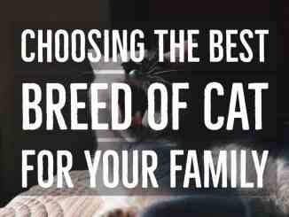 The Best Breed Of Cat For Your Family
